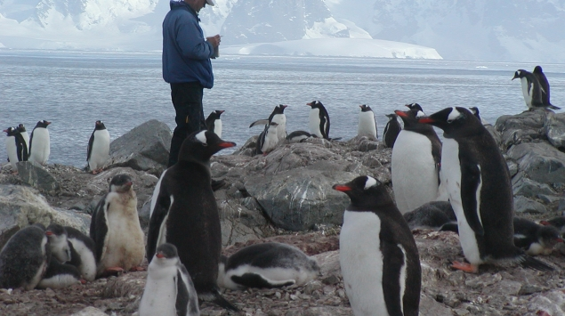 Bill Fraser (Polar Oceans Research group, Sheridan, MT) with Gentoo penguins (Pygoscelis papua) at Biscoe Point, Antarctic Peninsula, January, 2002. PAL LTER.