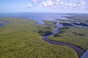 An aerial shot looks over the wetland-ocean interface