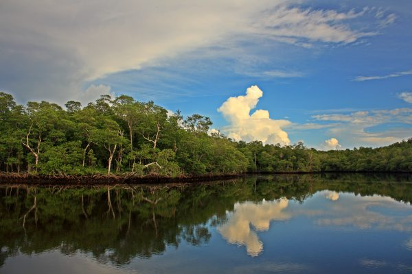 Calm wetland waters reflect the sky and vegetation in the Everglades