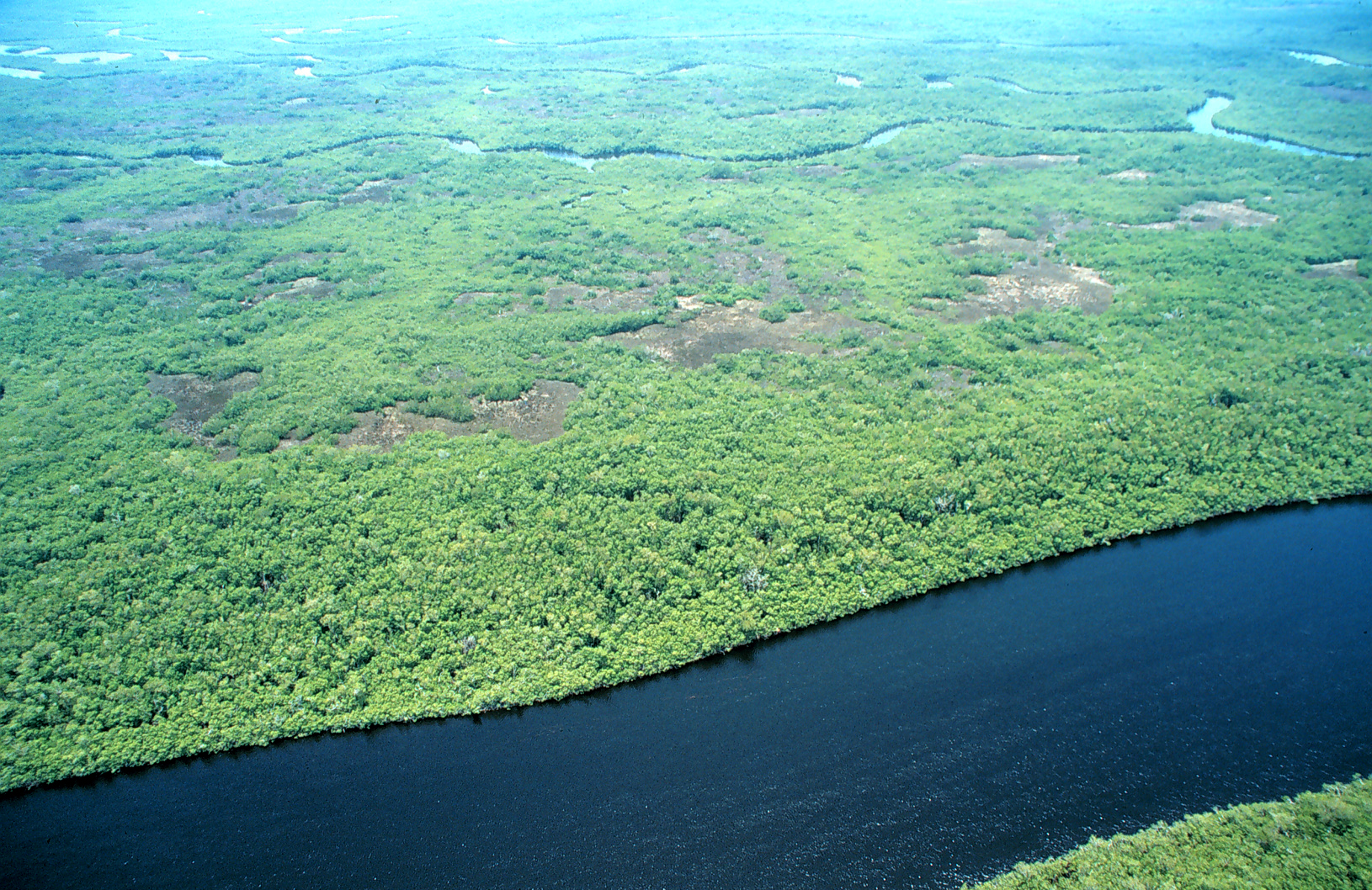 An aerial shot of the expansive wetland habitat that characterizes the Everglades