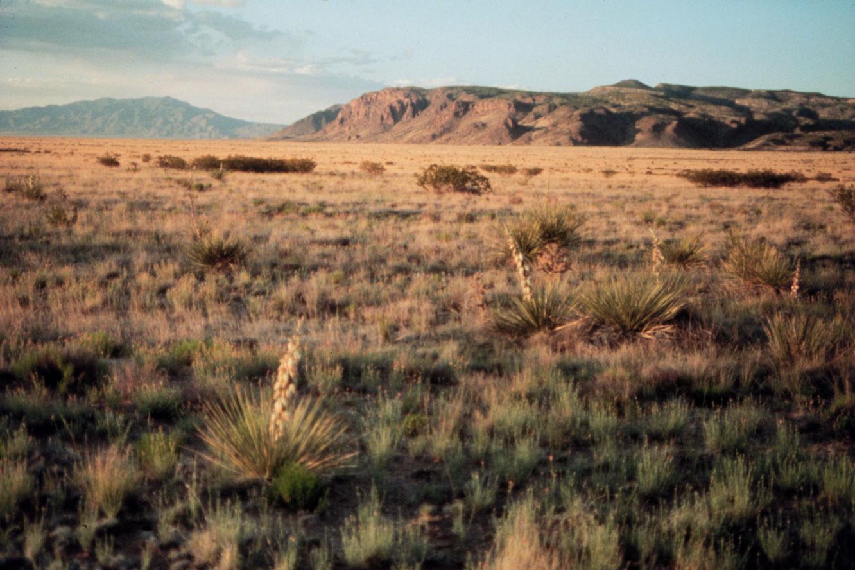 Cold desert biome, Sevilleta LTER, New Mexico.