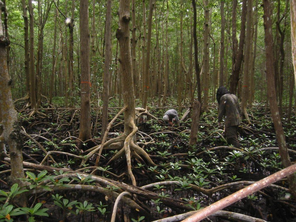 FCE_mangrovesampling_FKA_SHARK_RIVERA_3.jpg