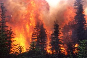 Wildfire in Alaskan black spruce forests.