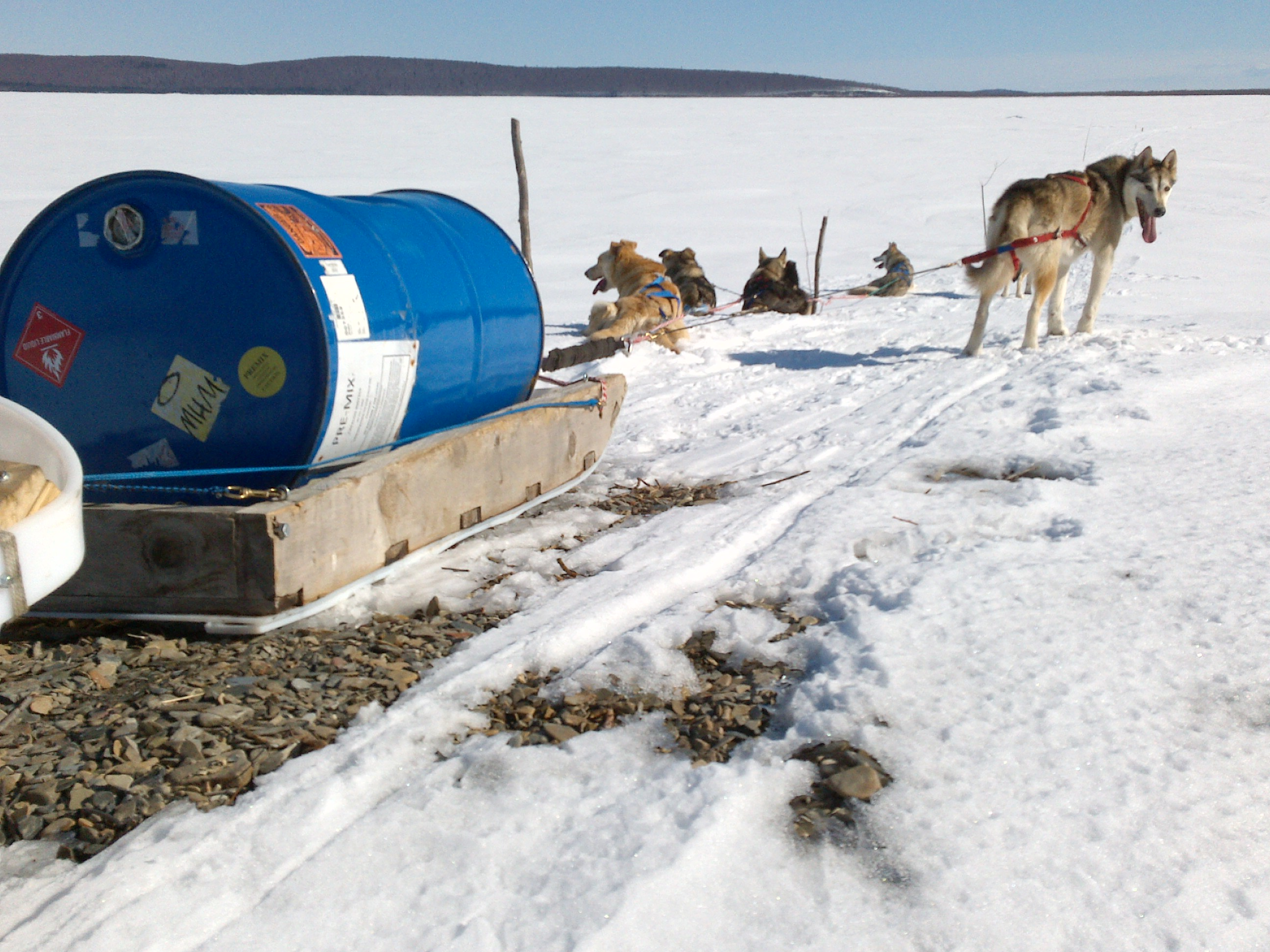 sled dogs pull supplies over bare patch of ground