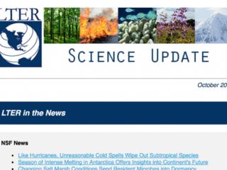 image of newsletter