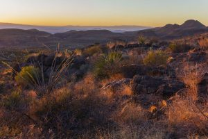 Landscape in the Chihuahuan desert