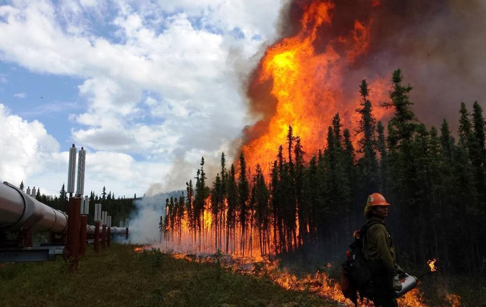 Arctic wildfire