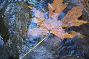 leaf in streamwater