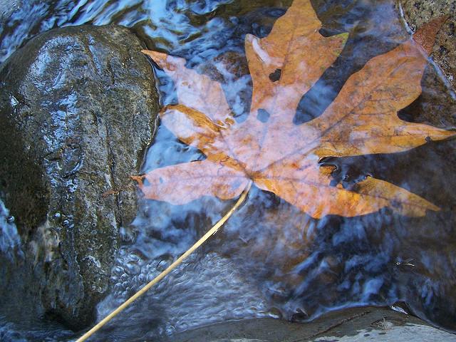 leaf in streamwater