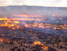 grassland wildfire