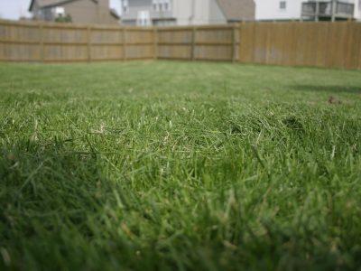Mown Lawn