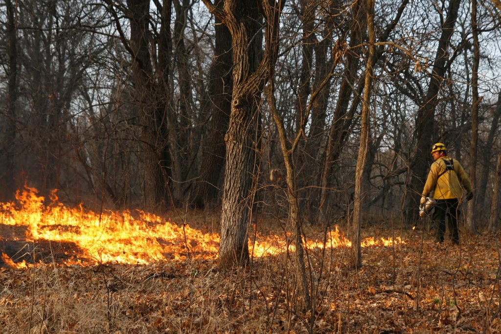 low fire in presecribed burn area under trees