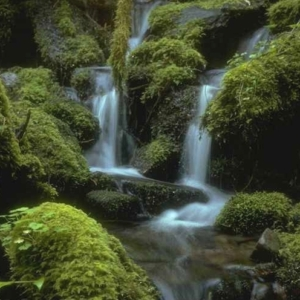 moss, rocks, logs, water
