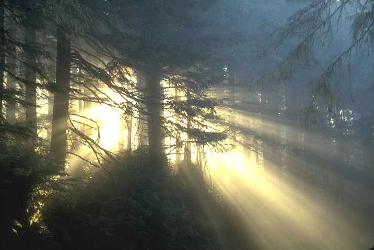 light through tall trees