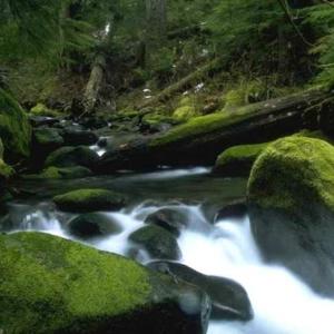 river, moss, rocks, fallen trees