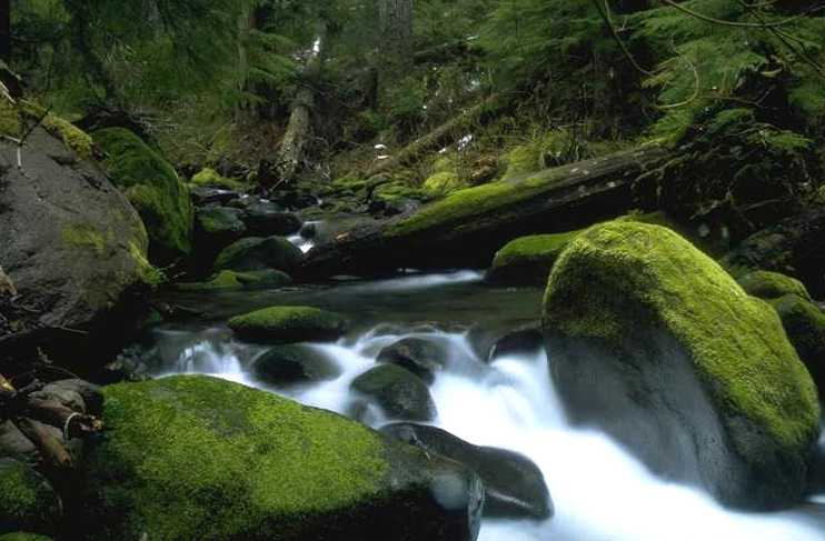 river, moss, rocks, fallen trees