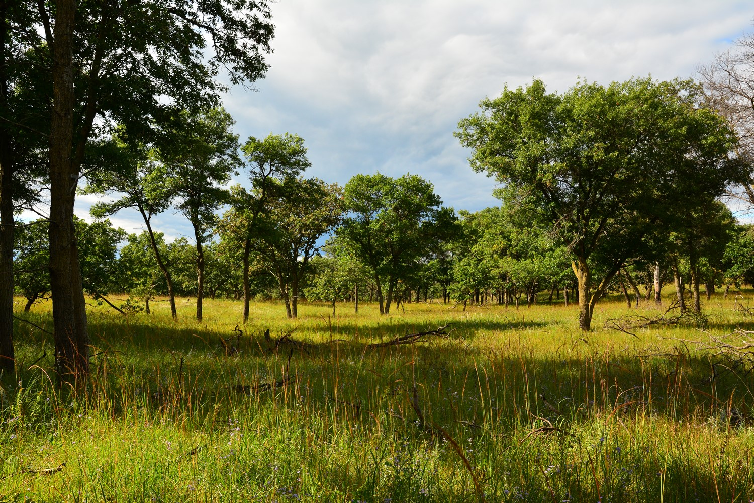 savannah grassland with trees