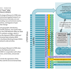 describes the relationship of network components, including sites, committees, LTER Executive Board, LTER Network Office, and Environmental Data Initiative
