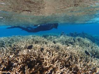 snorkeler over staghorn coral