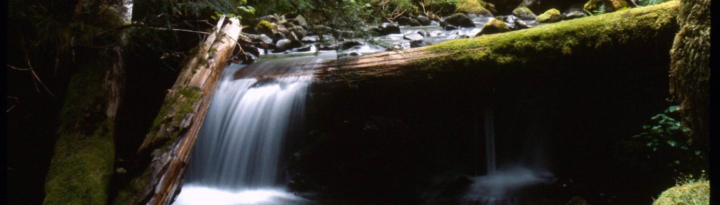 waterfall pouring over mossy log