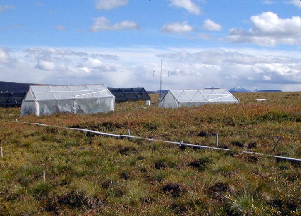 greenhouses on tussock tundra