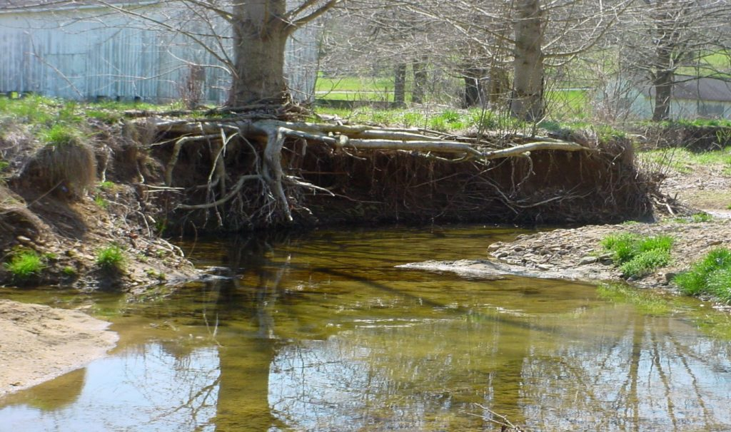 stream bank