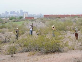 Three individuals collecting samples in desert brush.
