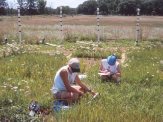 two students sampling grasses