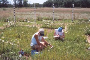 two students sampling grasses