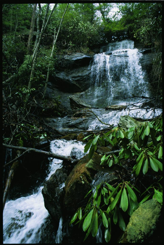 waterfall with rhododendrons