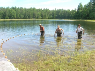 three young men seining in a shallow area of lake