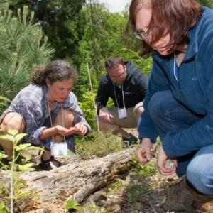 participants examine the forest floor surrounding a fallen log