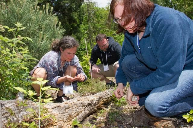 participants examine the forest floor surrounding a fallen log