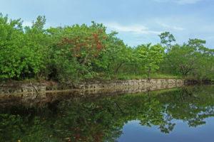Coastal mangroves in Everglades National park