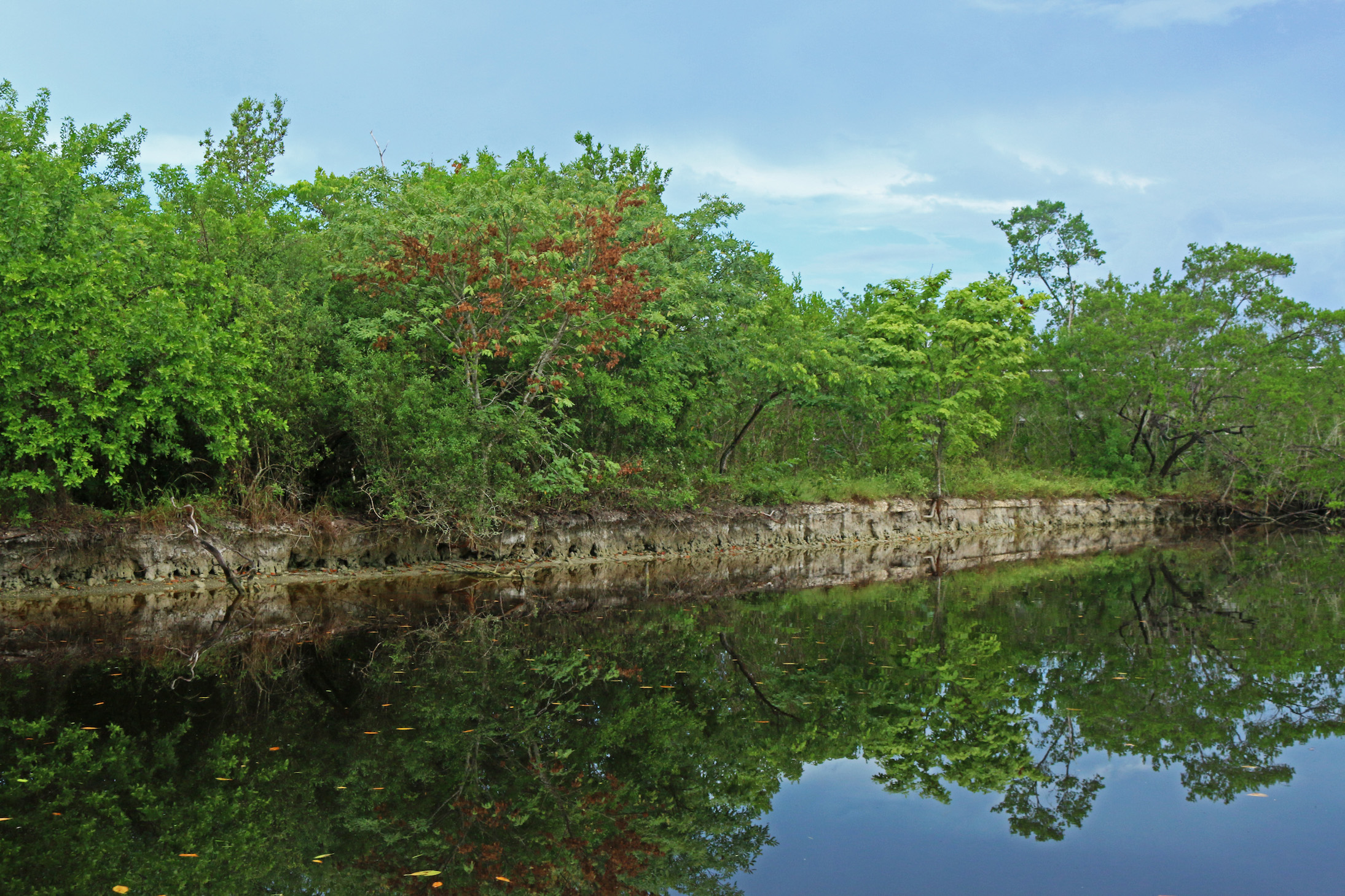Coastal mangroves in Everglades National park