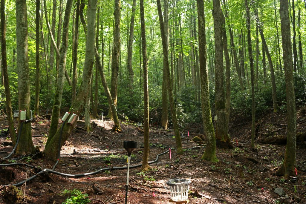 hydrologic research plot in the Southern Appalachian Mountain study area