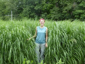 Kathryn standing on the edge of one of the four switchgrass plots. At this point, in July, the switchgrass had grown to around six feet tall, making it was hard to be seen from within. Picture Credit: Kelechi Ukachukwu