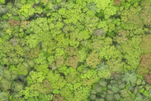 Overhead view of Harvard Forest LTER site.