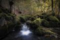 stream rushing through a forest landscape