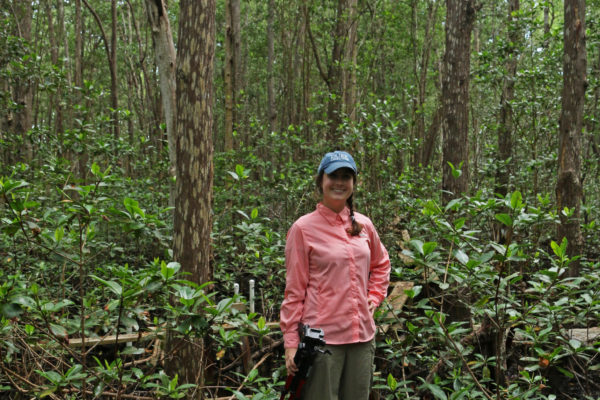 The author traverses wooden plants to reach a study site deep within the FCE mangroves.