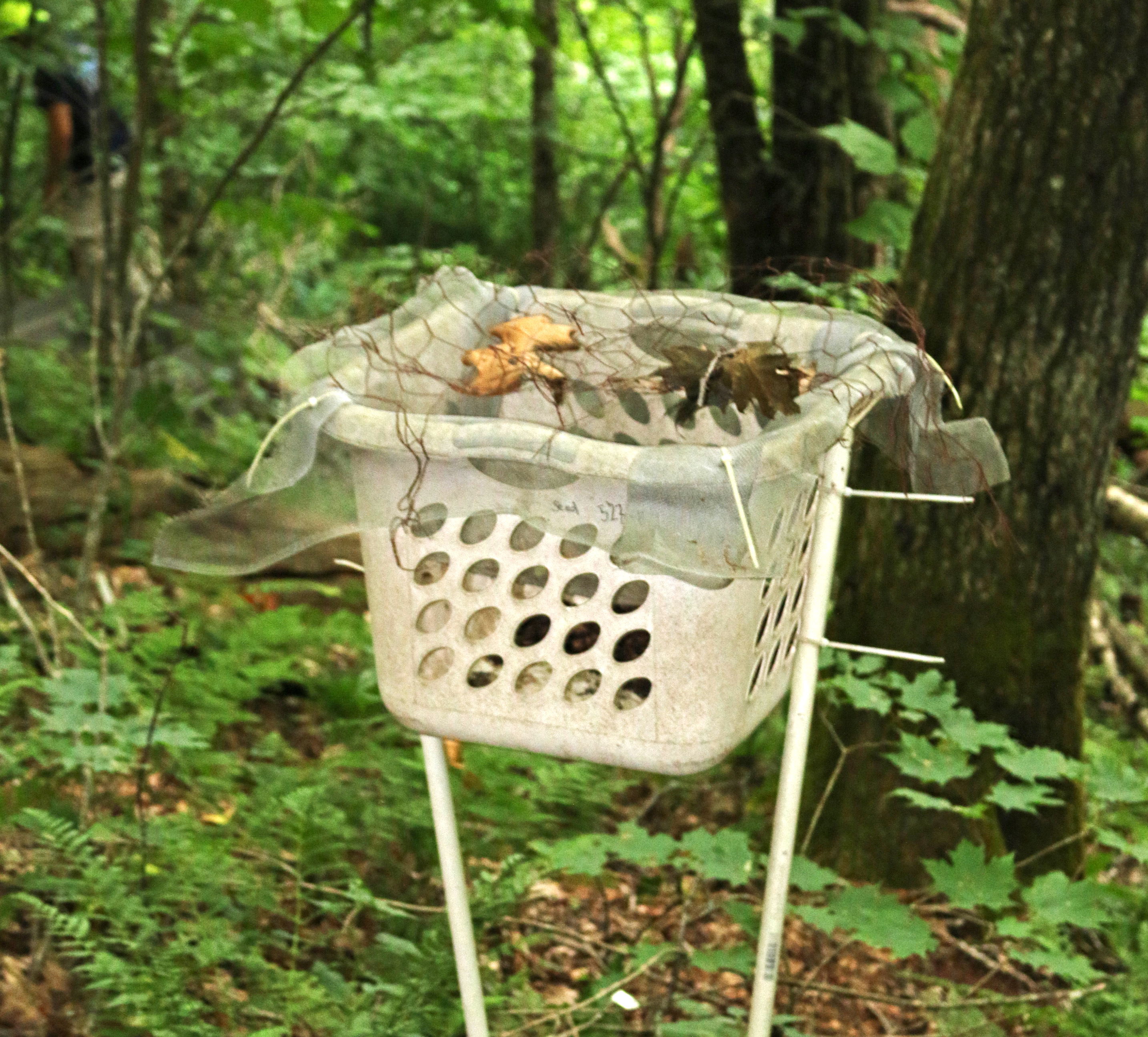 Leaf litter basket at transect #327, used to measure rates of leaf fall.