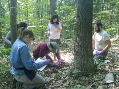 Soil sample collection from the Harvard Forest in Petersham, Massachusetts.