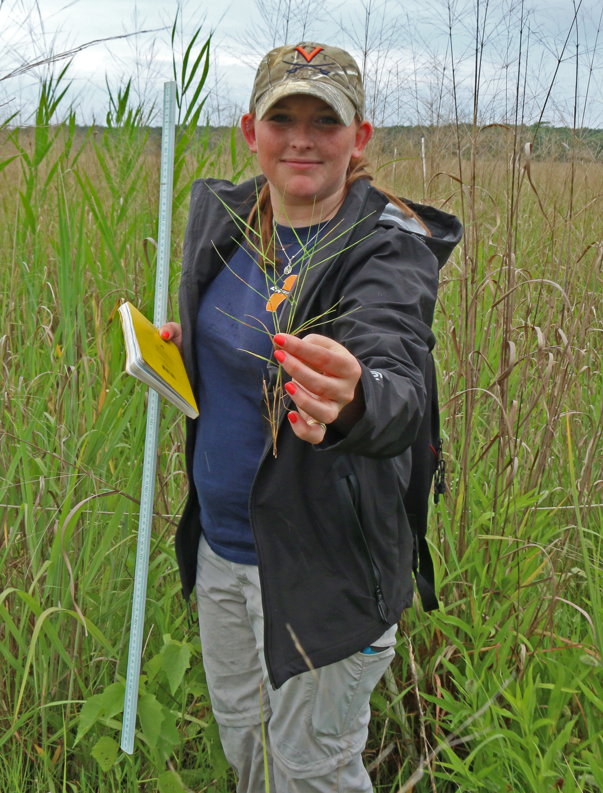PhD student Victoria Long displaying one of the plant species at her study site along Virginia's Eastern Shore, where salt marsh is starting to expand into agricultural fields.