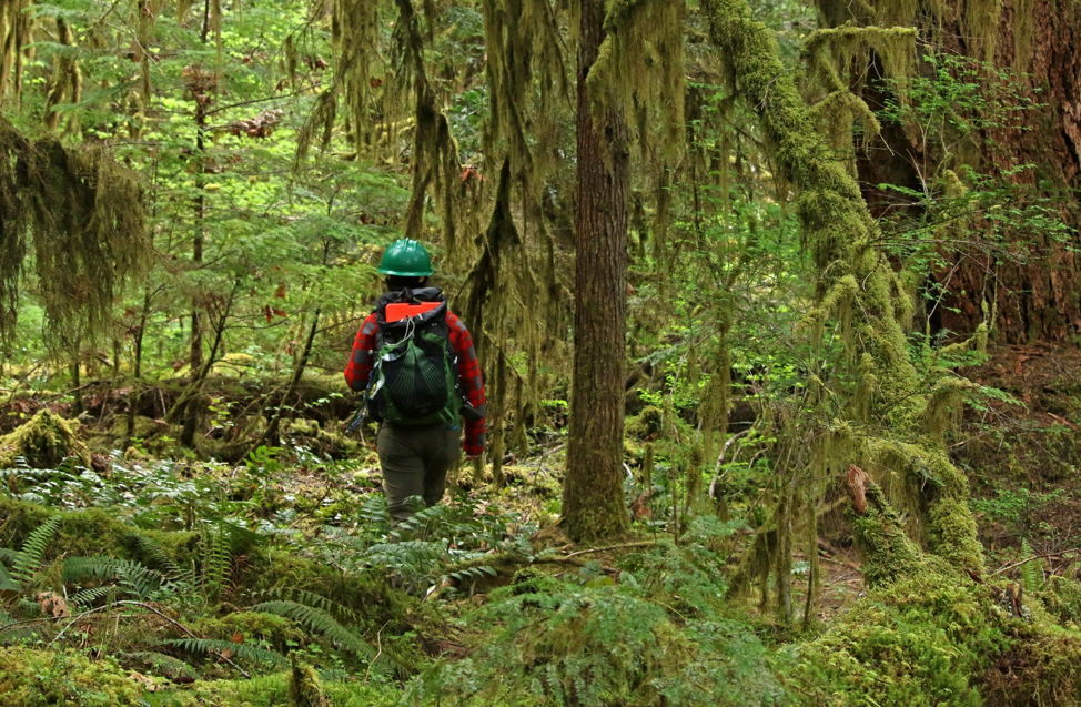 Researcher Marie Tosa hikes to her camera trap.