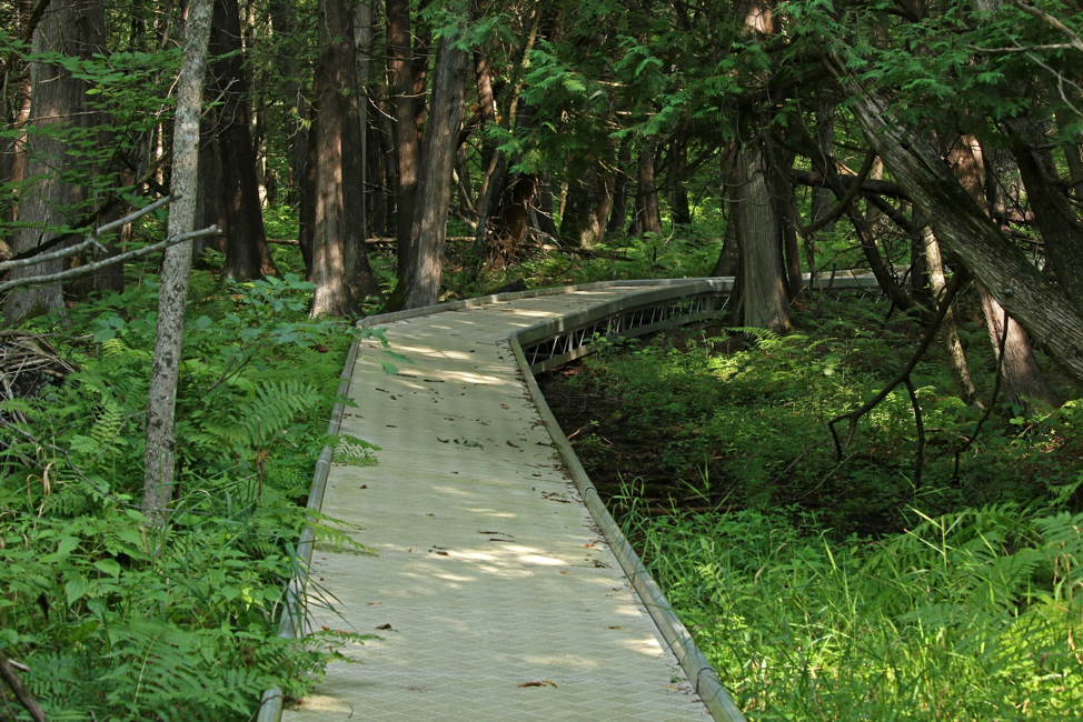 Raised boardwalk on CDR's nature trail.