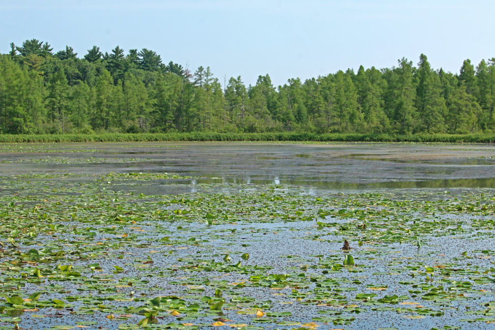 Cedar Bog Lake.