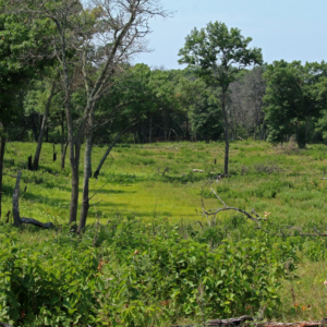 CDR savanna.