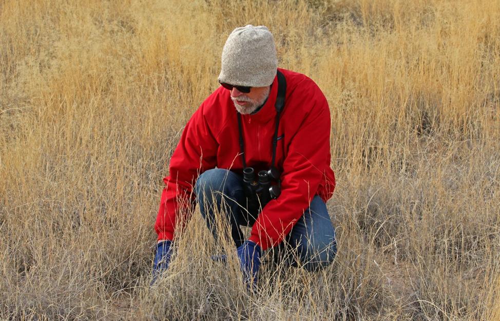 John Anderson examining grass species at the Jornada Basin LTER site.