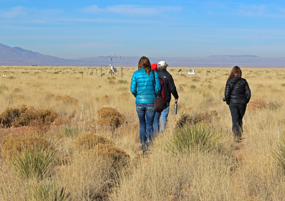 Researchers walk across the Sevilleta grassland.