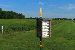 A Kellogg bee box.